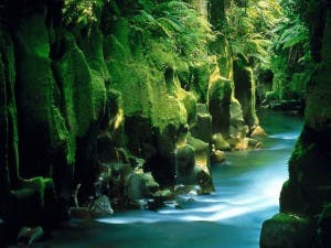 New Zealand Nature 1920x1440 HD Wallpapers Pack 2 8.jpg Te Whaiti Nui A Toi Canyon Whirinaki Forest North Island New Zealand 300x225 5 Surprising Stats: Colorado's Marijuana Industry