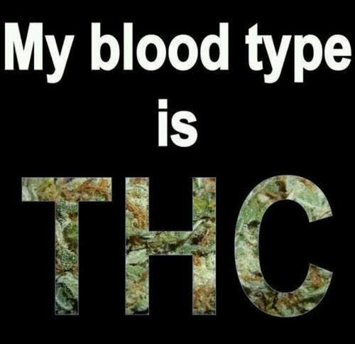 Blood Type THC How do you explain your brain on drugs to someone whos never tried them? Visually of course.