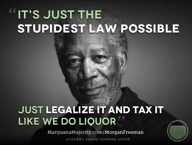 Morgan 3 Cannabis Prohibition Is Wasting Lives And Eating Your Tax Dollars
