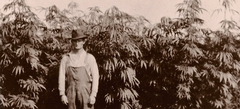 hemp history How do you explain your brain on drugs to someone whos never tried them? Visually of course.
