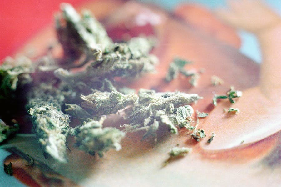 weed bits How do you explain your brain on drugs to someone whos never tried them? Visually of course.