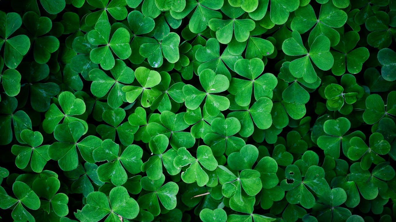 Green leaf clover wall HD nature wallpaper 1366x768 Which Subscription Cannabis Service is Right for You? Potbox vs. Marvina