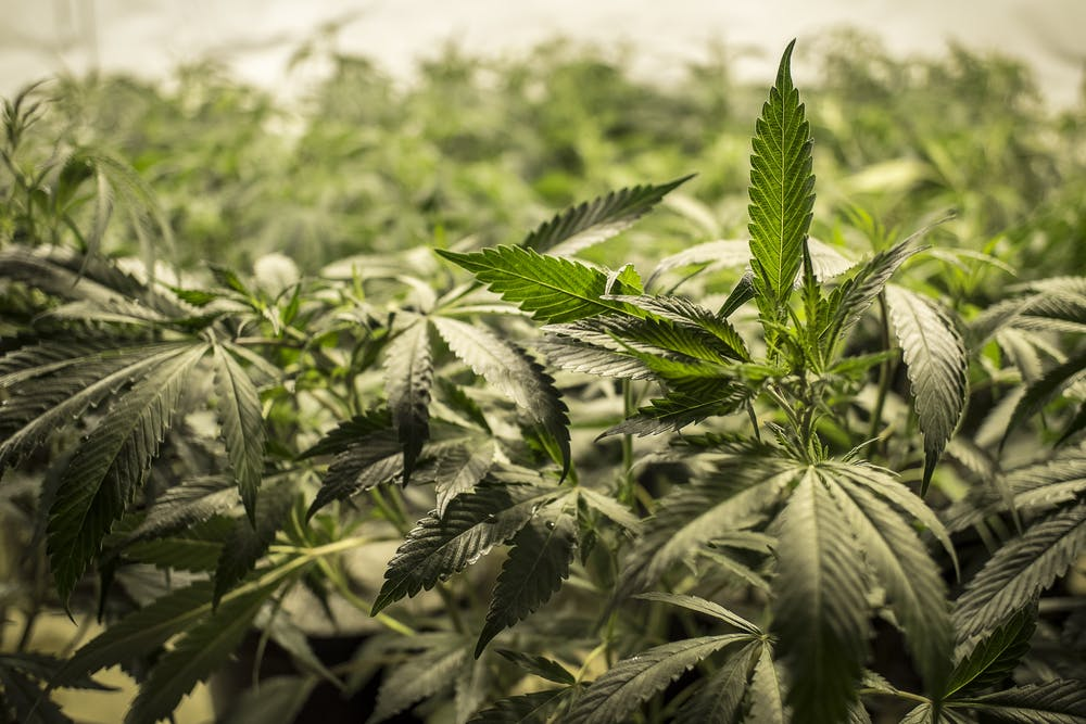 shutterstock 263402744 Which Subscription Cannabis Service is Right for You? Potbox vs. Marvina