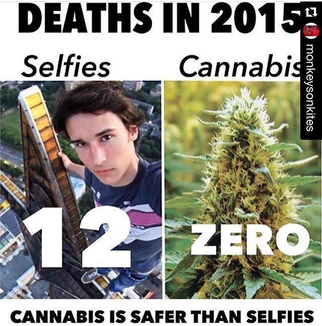 Deaths in 2015 Stephen Colbert: Welcome To The First Church of Cannabis