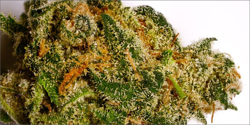 strains for pain 3 Stephen Colbert: Welcome To The First Church of Cannabis