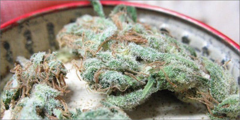 strains for pain 4 Stephen Colbert: Welcome To The First Church of Cannabis