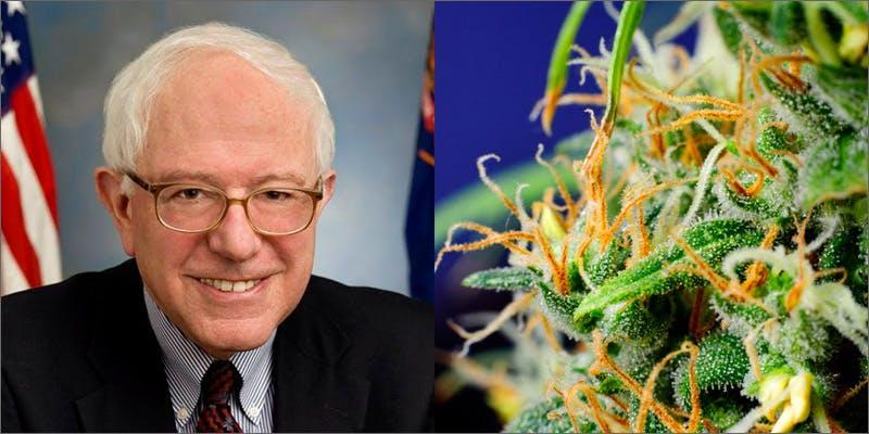 bernie nug Marijuana Advocates Expect Big Things From Bernie Sanders After Debate