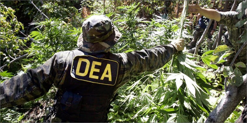 dea 02 DEA Employees Fail Drug Tests, Still Allowed to Terrorize Marijuana Users