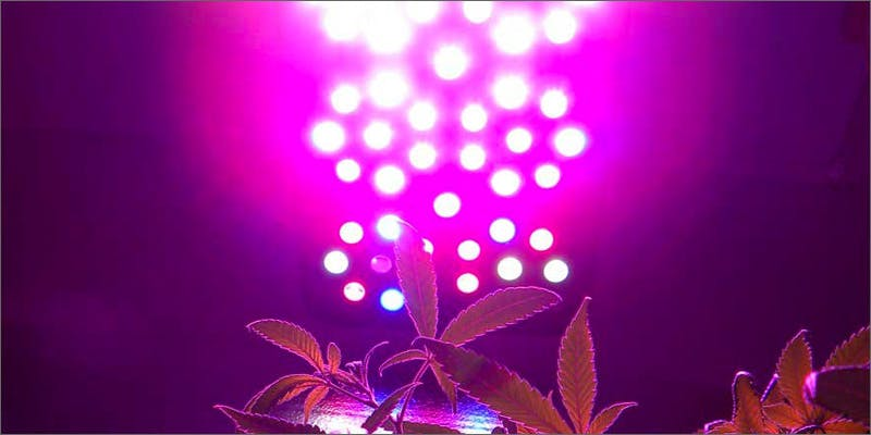 led lights Marijuana And Modern Day Religion. Is It A Sin?