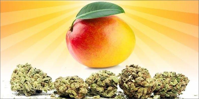 mango and weed