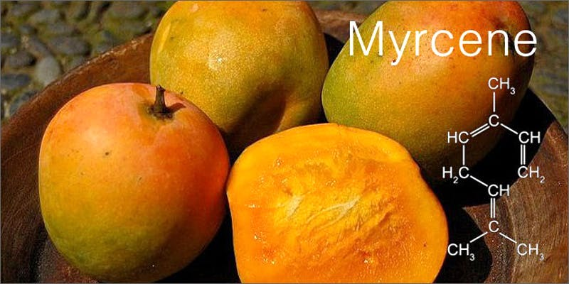 mango myrcene Marijuana And Modern Day Religion. Is It A Sin?