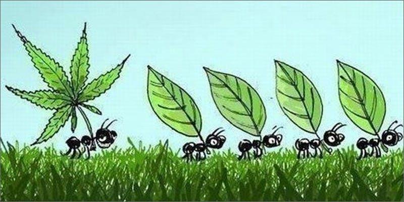 paranoia ants What Causes Marijuana Paranoia?