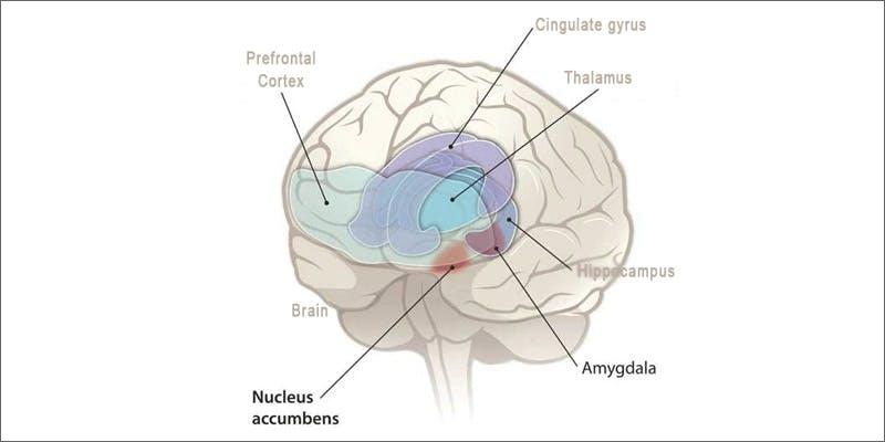 paranoia brain Marijuana And Modern Day Religion. Is It A Sin?