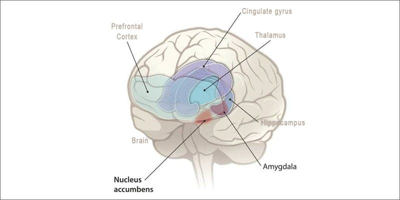 paranoia brain What Causes Marijuana Paranoia?