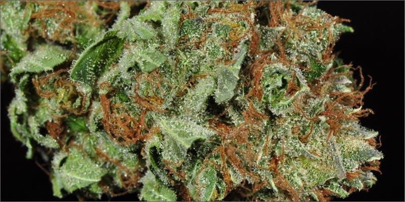 paranoia bud What Causes Marijuana Paranoia?