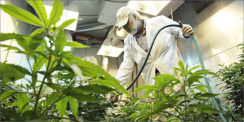 pesticides 04 Marijuana And Modern Day Religion. Is It A Sin?
