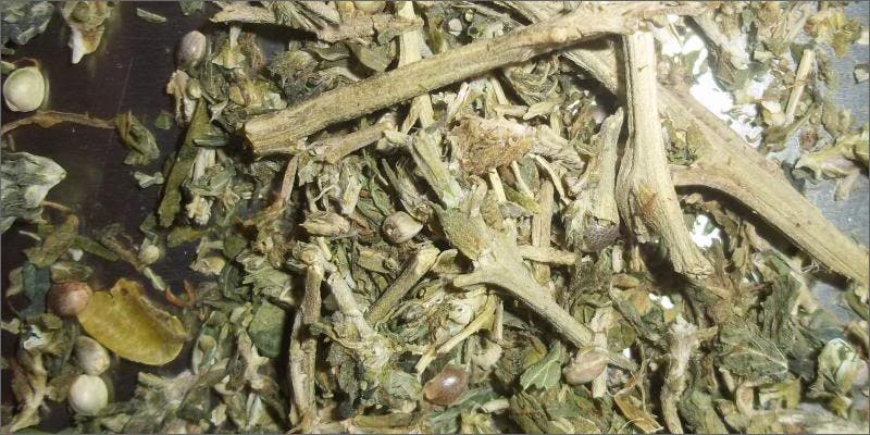 What to do with cannabis stems