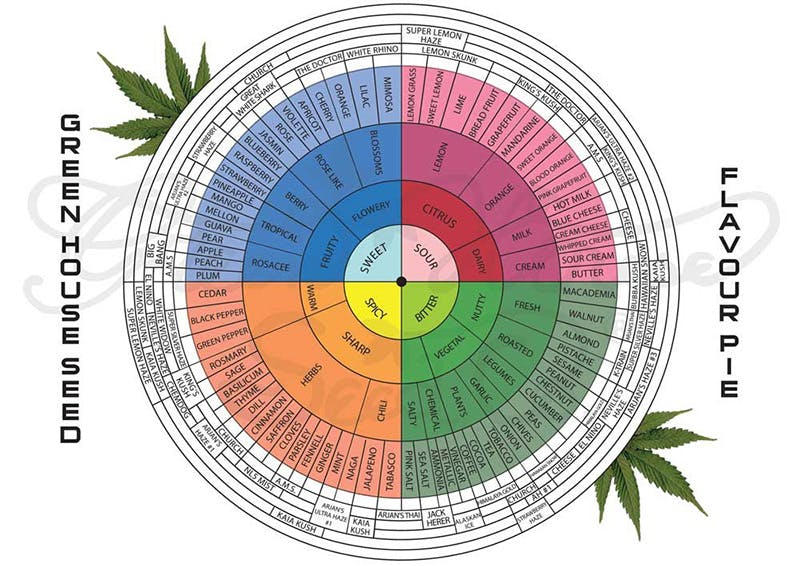 terpenes chart Marijuana And Modern Day Religion. Is It A Sin?