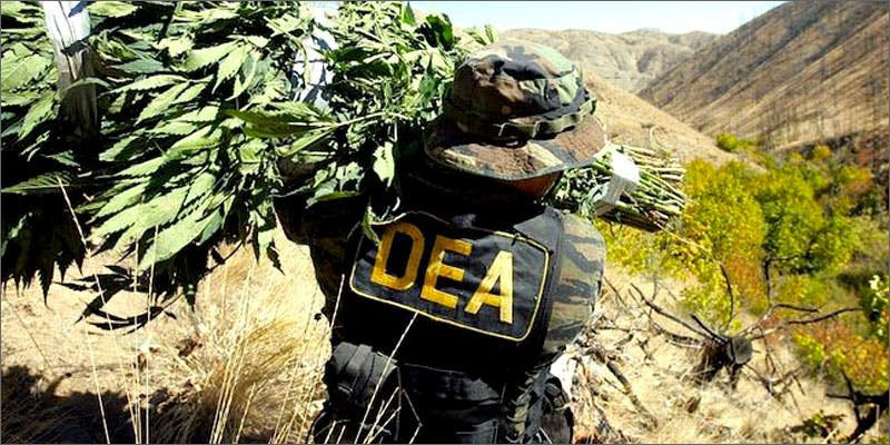DEA destroys 30,000 plants
