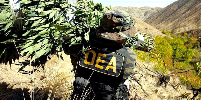 DEA destroys 30,000 plants