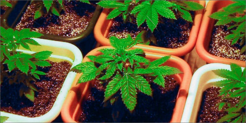 grow feature Could Weed Be In Liquor Stores Soon?