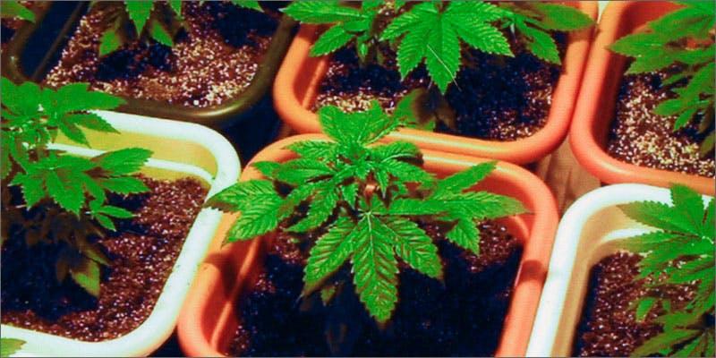 Marijuana growing resources