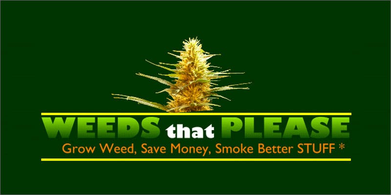 grow weeds that please Marijuana And Modern Day Religion. Is It A Sin?