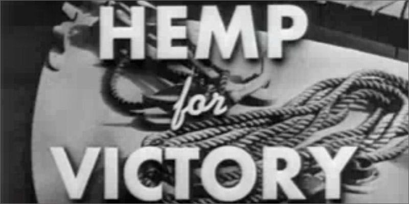 hemp victory 10 Cannabis Drinks You Must Try