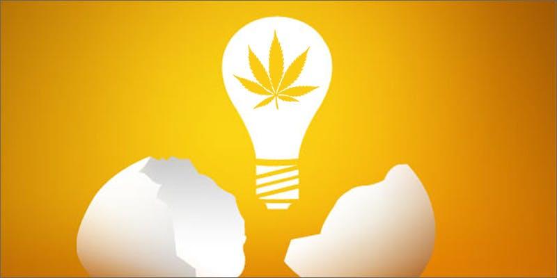 Cannabis business incubator