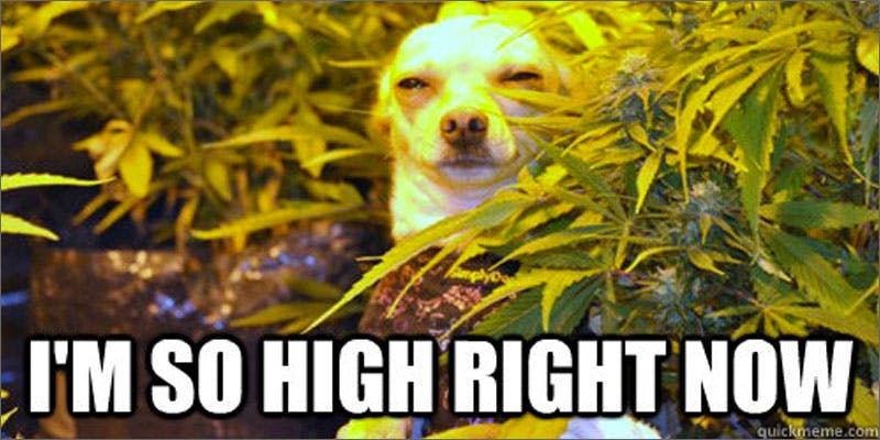no higher so high Marijuana And Modern Day Religion. Is It A Sin?