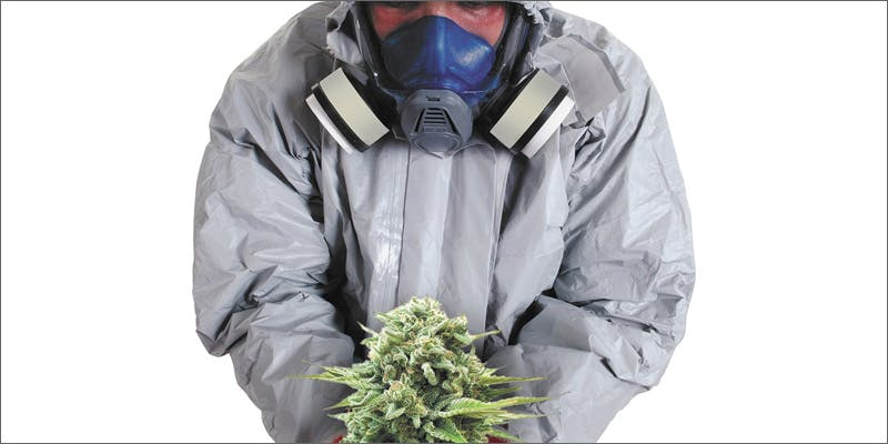 Marijuana and pesticides