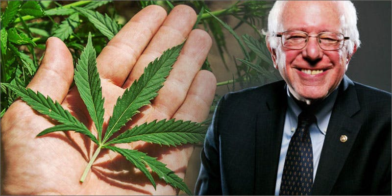 politics bernie Marijuana And Modern Day Religion. Is It A Sin?