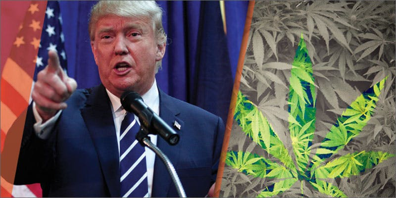 politics trump 10 Cannabis Drinks You Must Try
