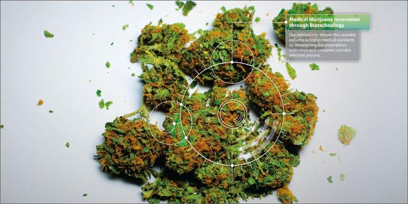 potbiotics weed 1 Success: Judge Approves Dying Woman Access To Medical Marijuana