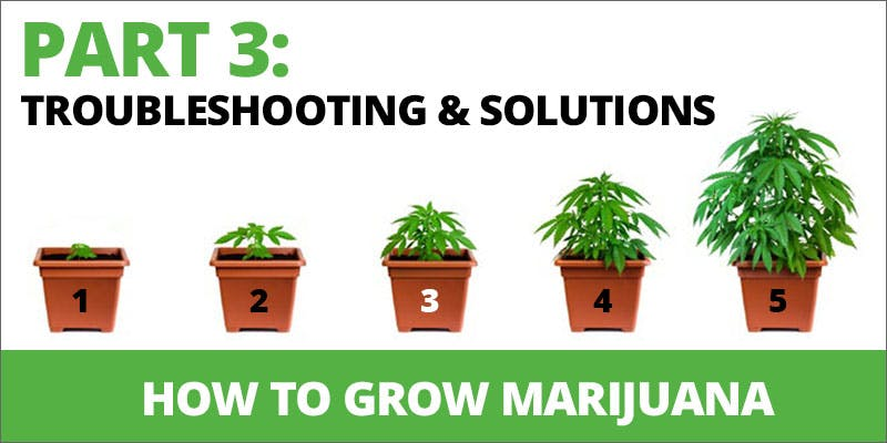 how to grow marijuana trouble shooting and solutions