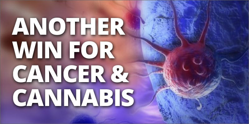 cannabis helps liver cancer