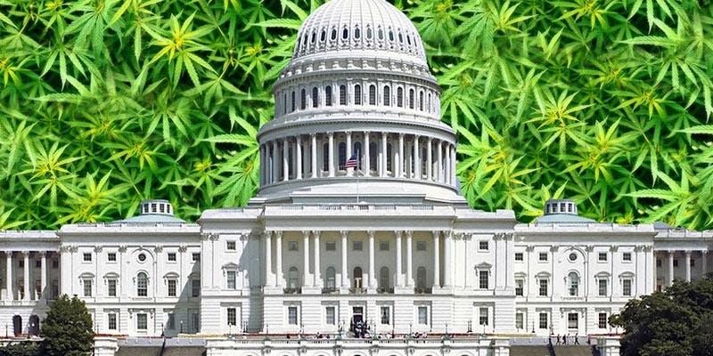 reclassify cannabis