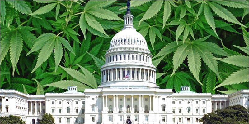 approve marijuana initiatives