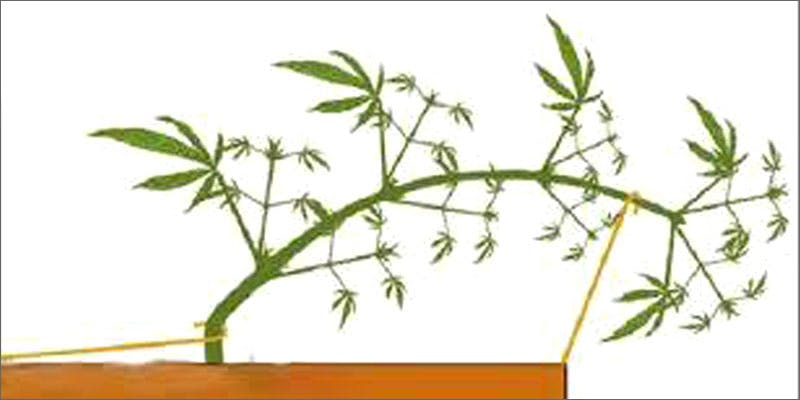 grow p2 lst Could Weed Be In Liquor Stores Soon?