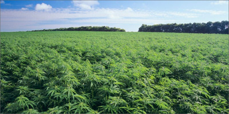 history hemp Could Weed Be In Liquor Stores Soon?
