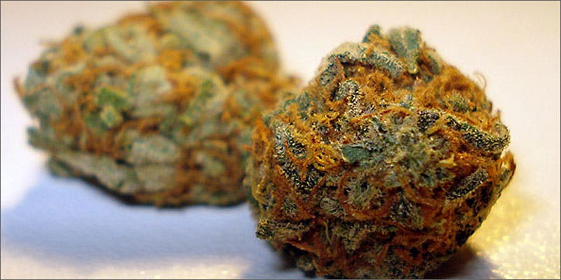holiday cali orange Perfect Strain For Each Day Of The Holiday Season