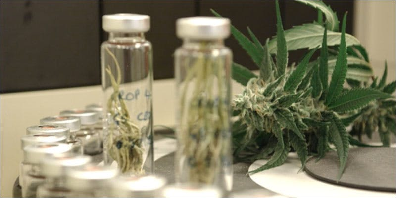 rich buds Rich Family Donates $33.7 Million To Cannabis Research. Thats A Lot Of Buds...