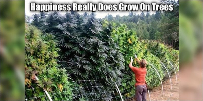 sun trees Could Weed Be In Liquor Stores Soon?