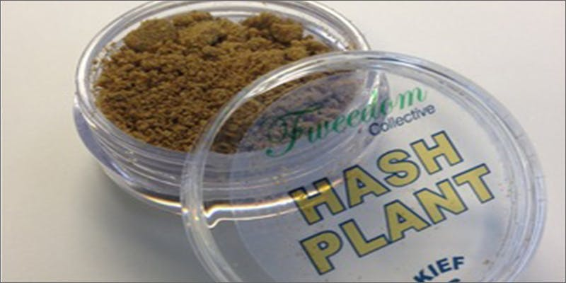 Kief hashplant 2 Dumbasses With Weed Get Paranoid And Turn Themselves In