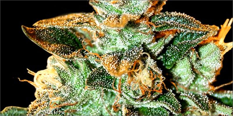 cataractkush Am I Allowed To Take My Cannabis On An Airplane?