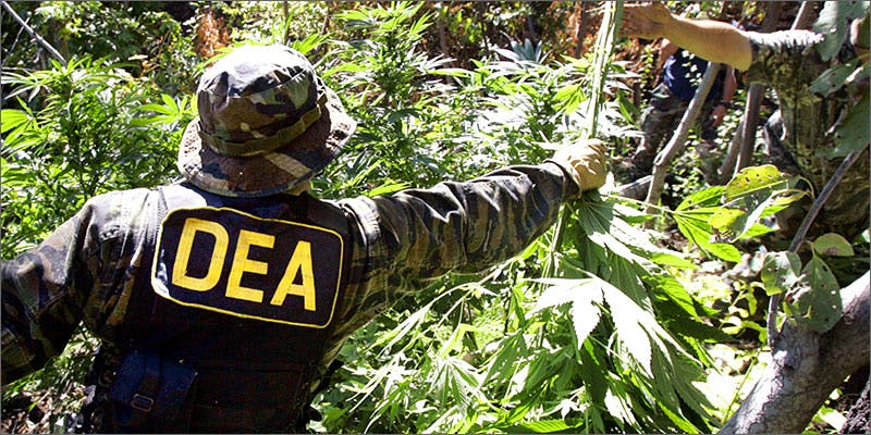 dea Why The Green Rush Is The New Wild West