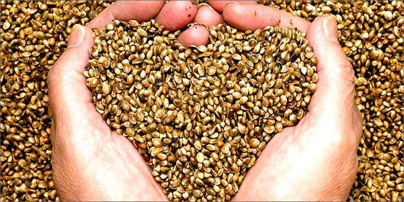 Raw Cannabis Seeds