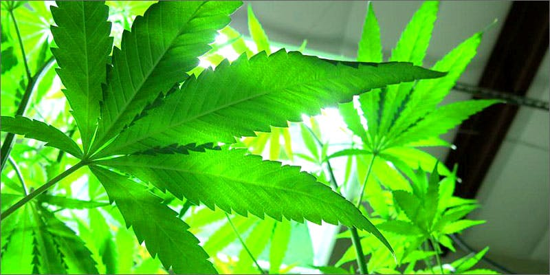 hemp Am I Allowed To Take My Cannabis On An Airplane?