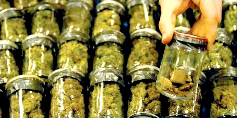 jars This Machine Grows Weed For You & Sends You A Text When Its Ready