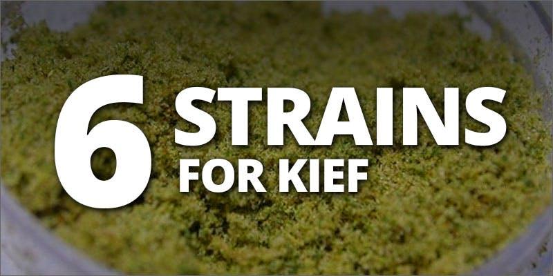 strains for kief